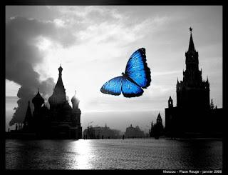 A borboleta dissecada