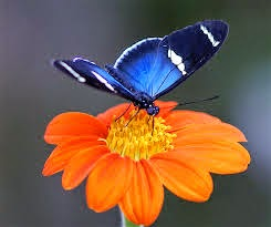 A flor que queria conhecer o mundo